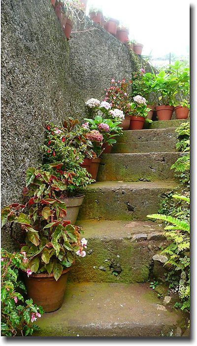 Plants-on-steps