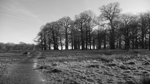 Frosty-landscape-B&W