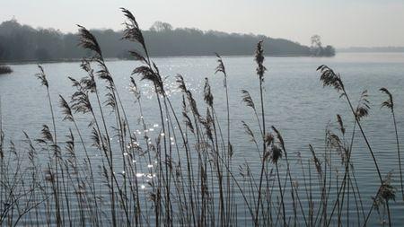Lough-Rynn