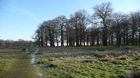 Frosty-landscape