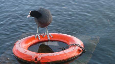 BuoyBird