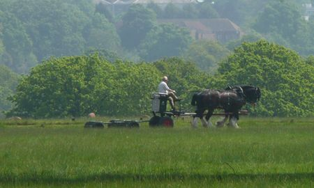 Horse-drawn-mower