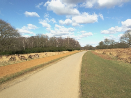 Cycle-path-and-deer